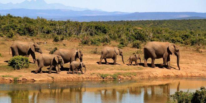 Hacer un safari en Sudafrica