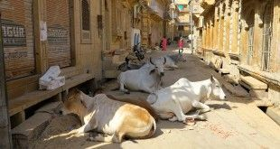 Calles de Jaisalmer