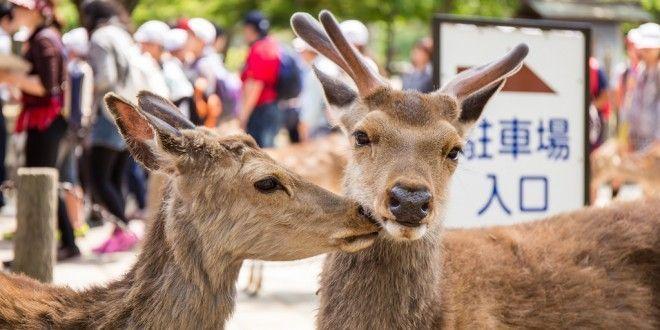 Visitar Nara