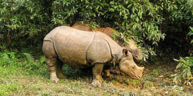 Excursion a Chitwan