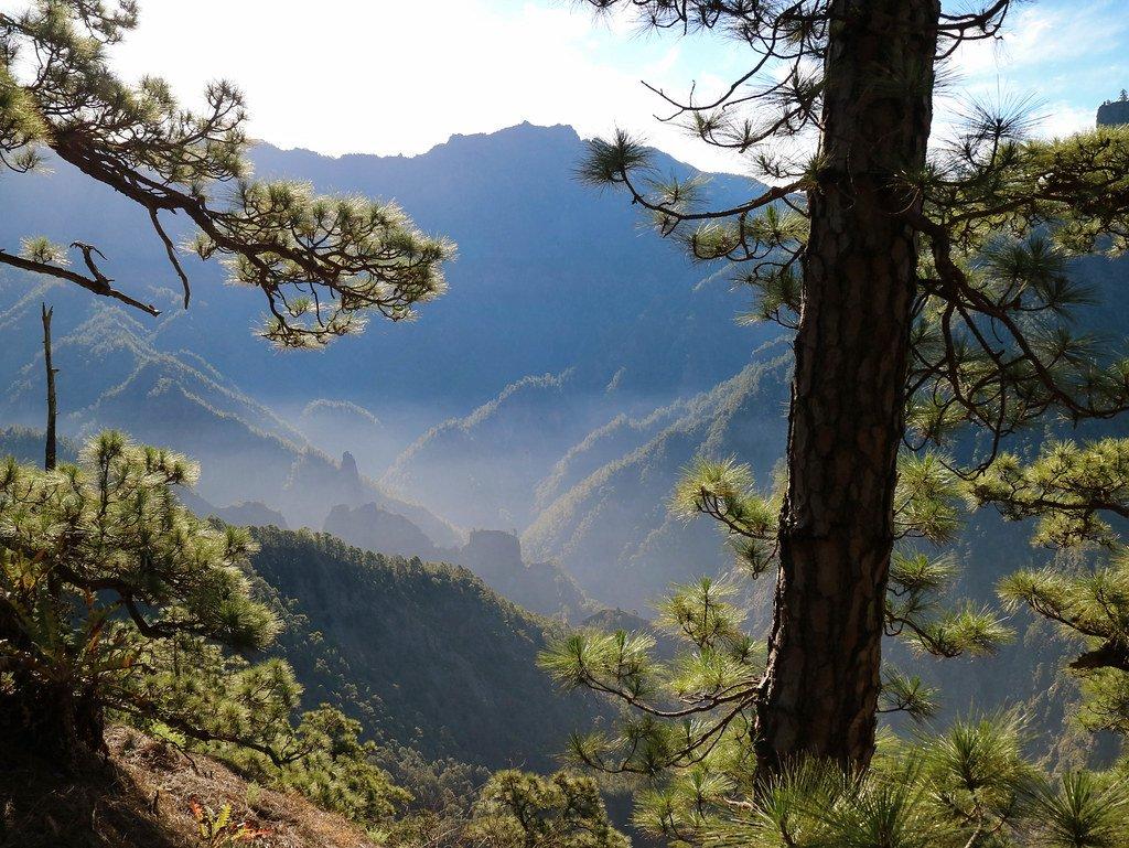 Pinar de La Palma