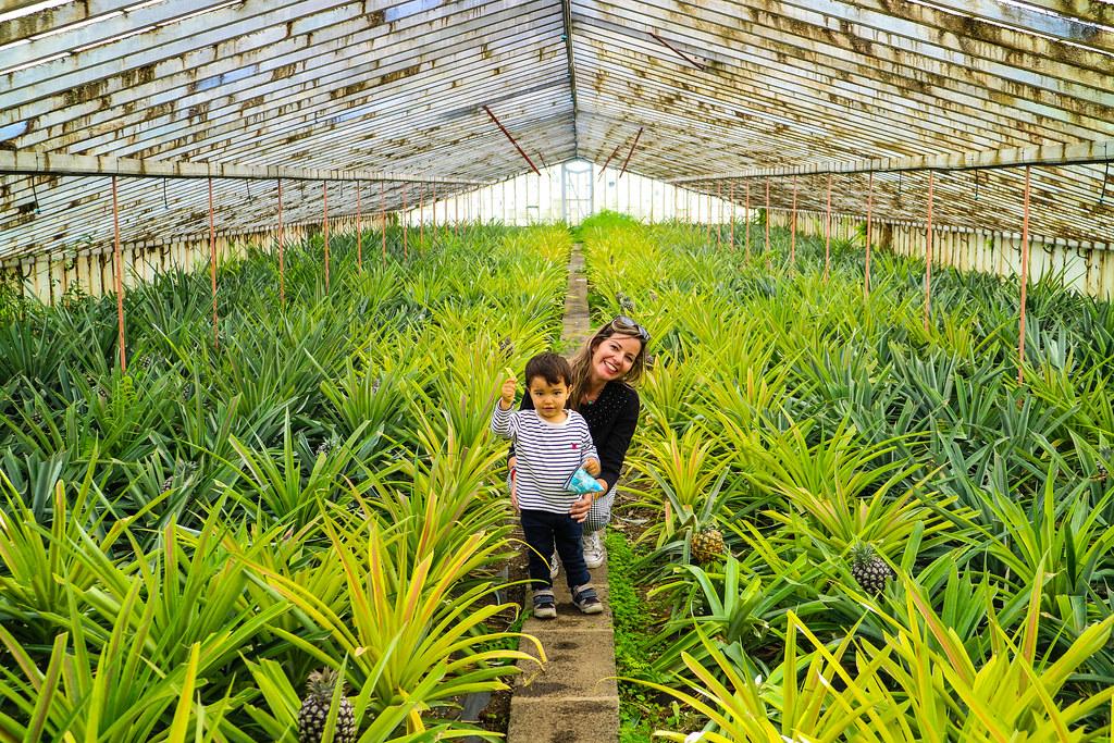 Plantação de Ananases dos Açores en Ponta Delgada
