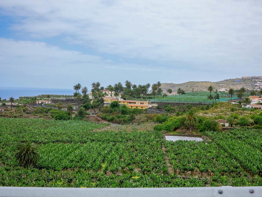 Finca de plataneras en Tenerife