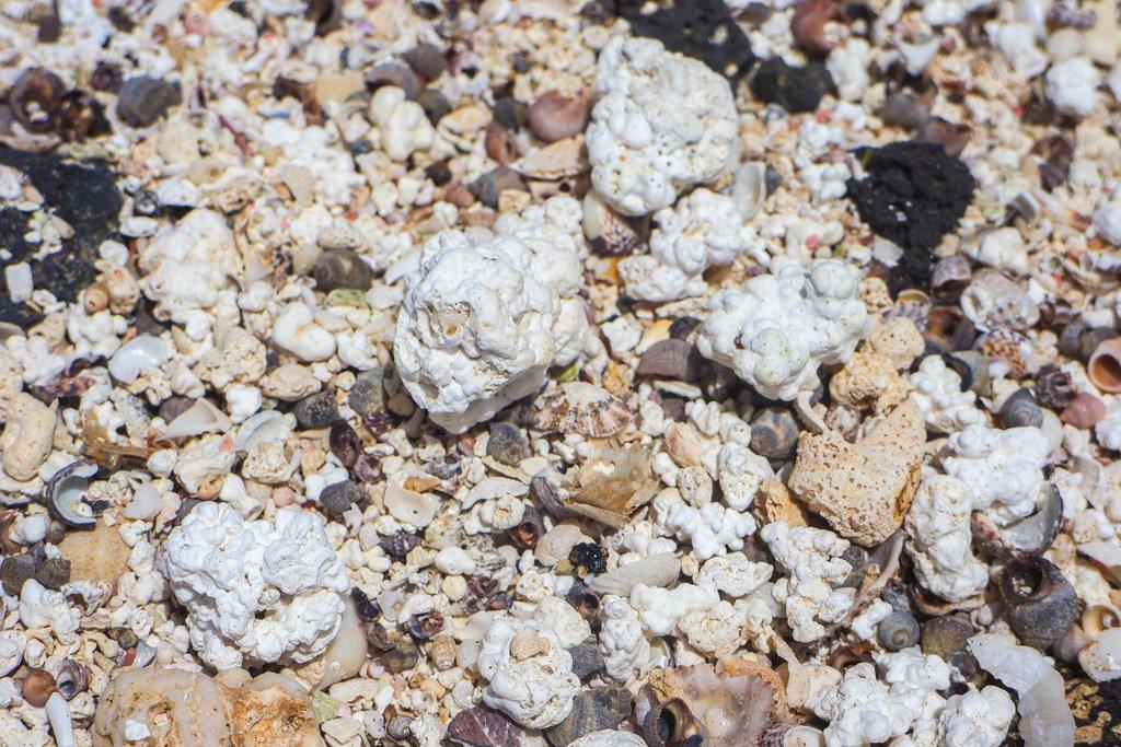 Costa orgánica formada por conchas