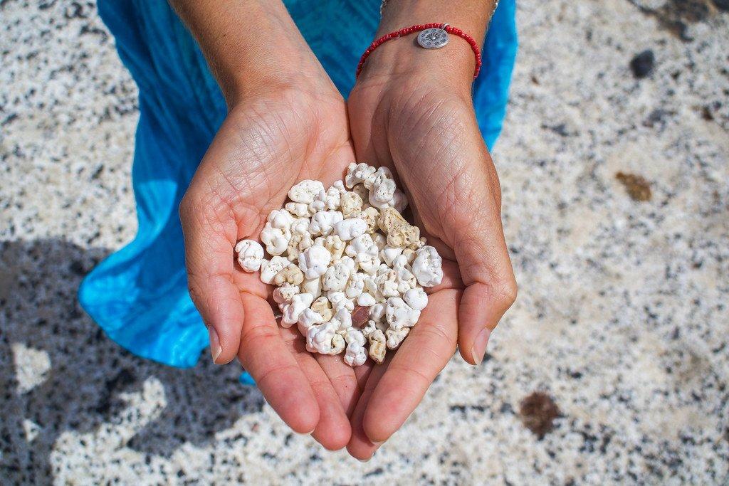 Rodolitos entre las manos en el playa El Hierro en Fuerteventura