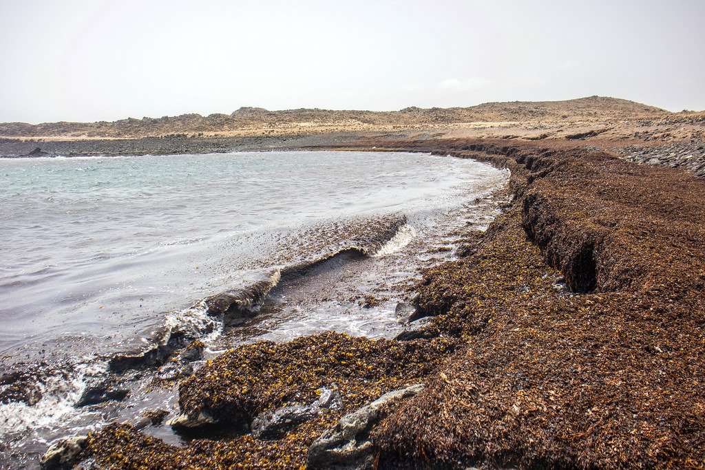 Playa llena de algas en Fuerteventura