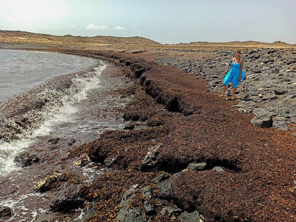 Costa llena de algas desprendidas por los temporales