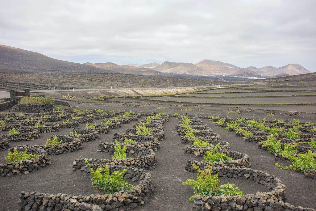 Paisaje vitivinícola de La Geria